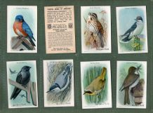 Trade / Cigarette cards set Useful Birds of America 1926 Church-Dwight